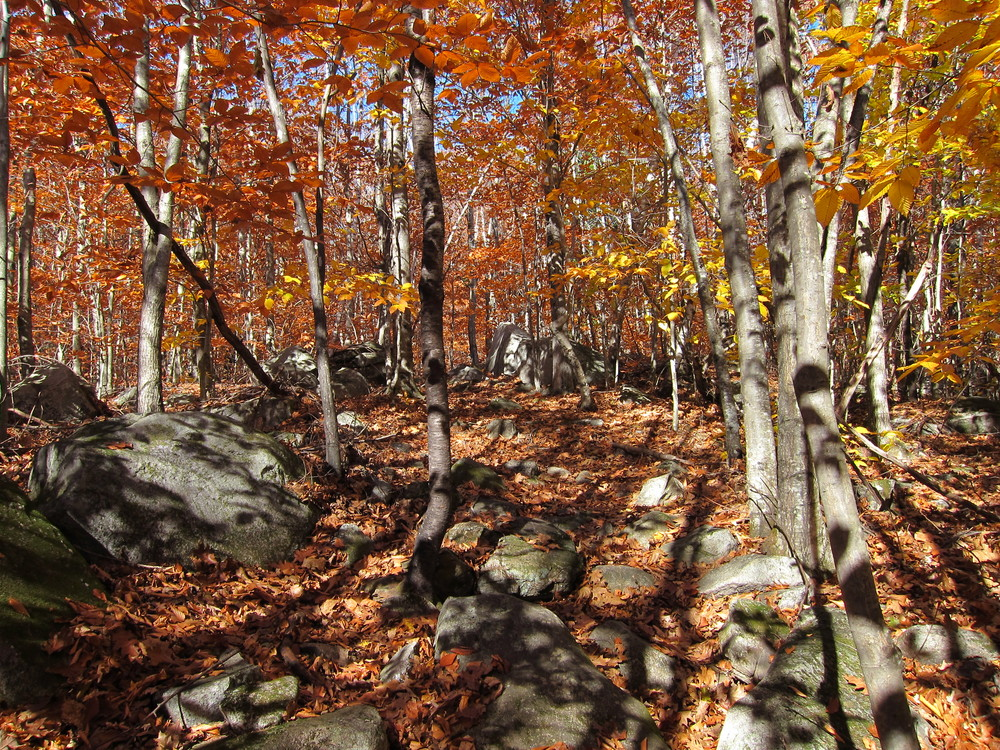Section of Round Top Trail (Credit: M. Morris)