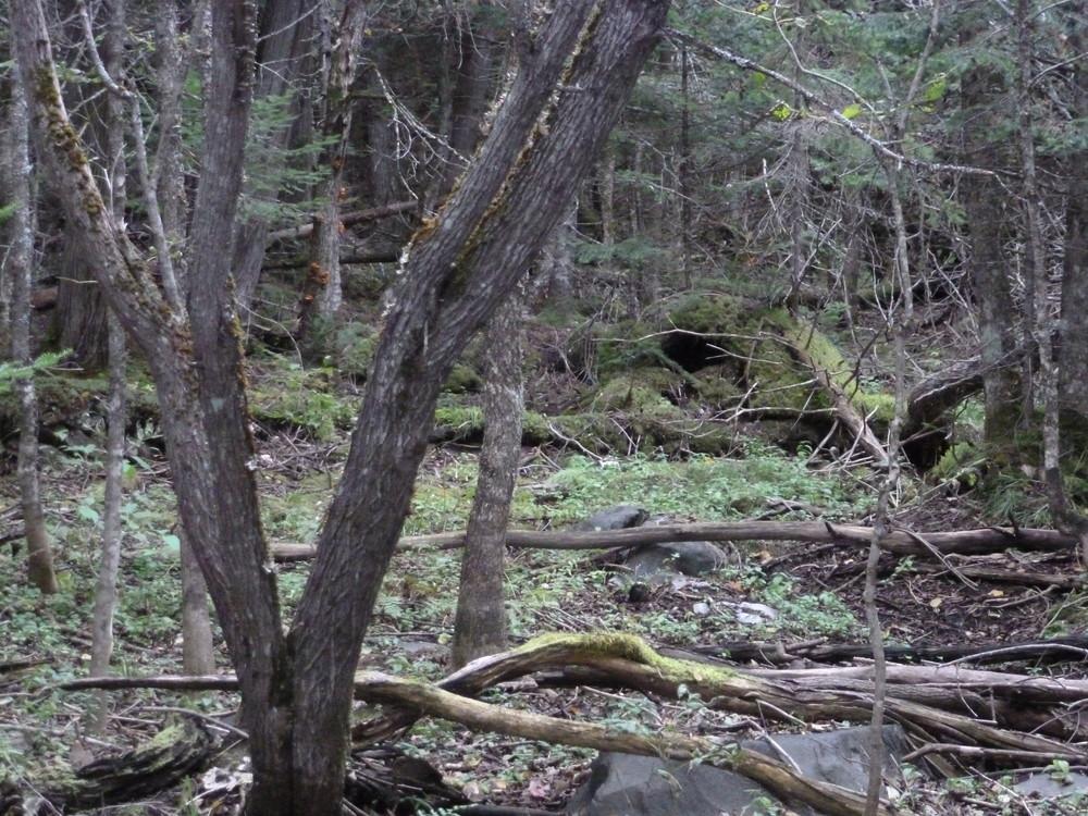 Moxie Falls trail (Credit: Chris Nason)