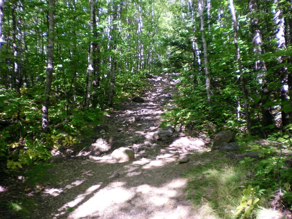 Brook Trail - It starts off easy... (Credit: Chris Nason)