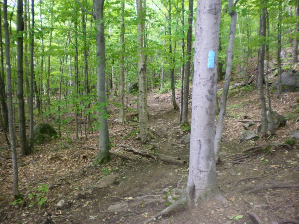Brook Trail - Follow the blue blazes! The trail is well-marked the whole way up. (Credit: Chris Nason)