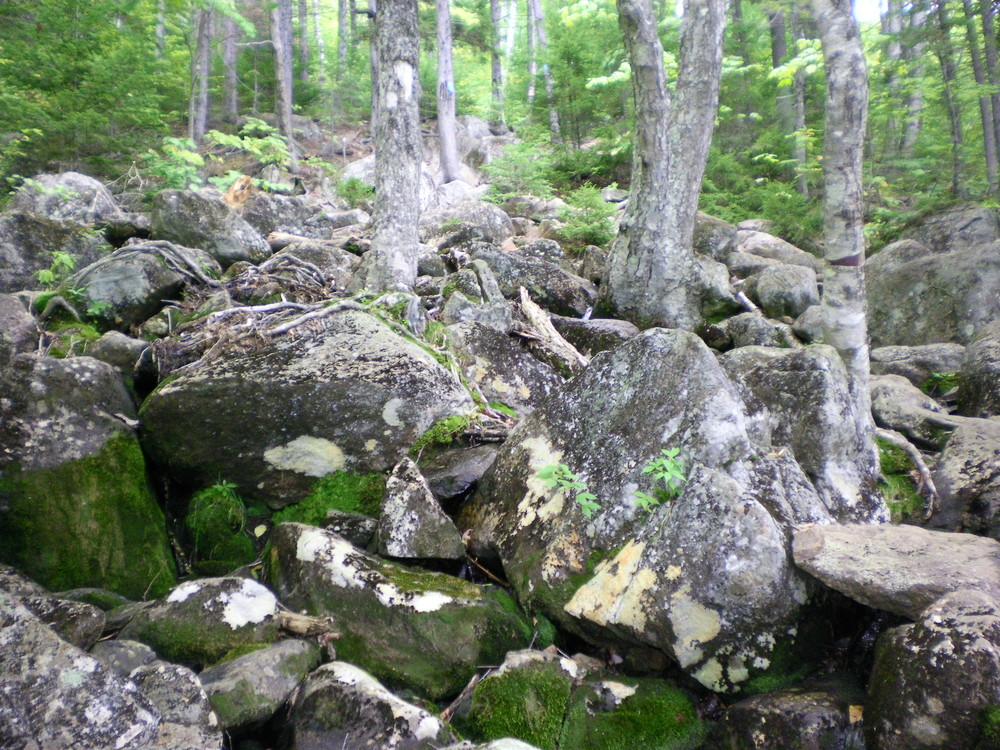 Brook Trail - Start scrambling over those rocks! (Credit: Chris Nason)