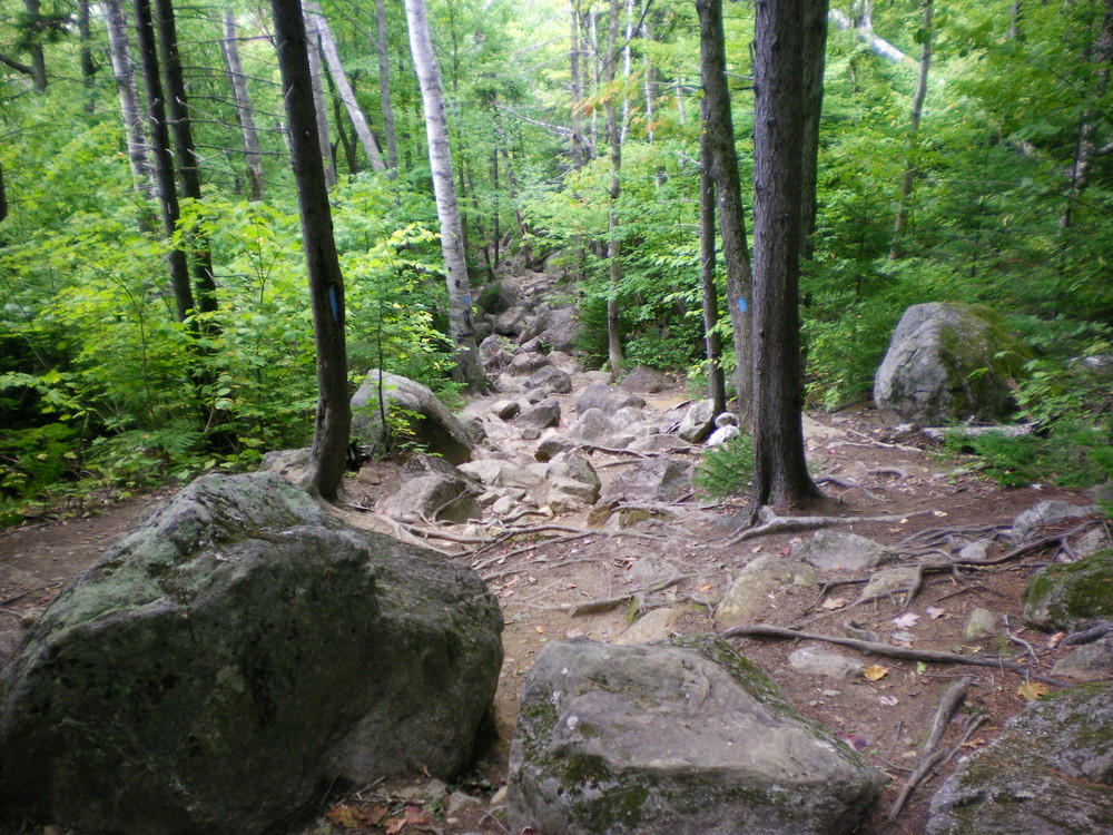 Brook Trail - Looking down the trail. (Credit: Chris Nason)