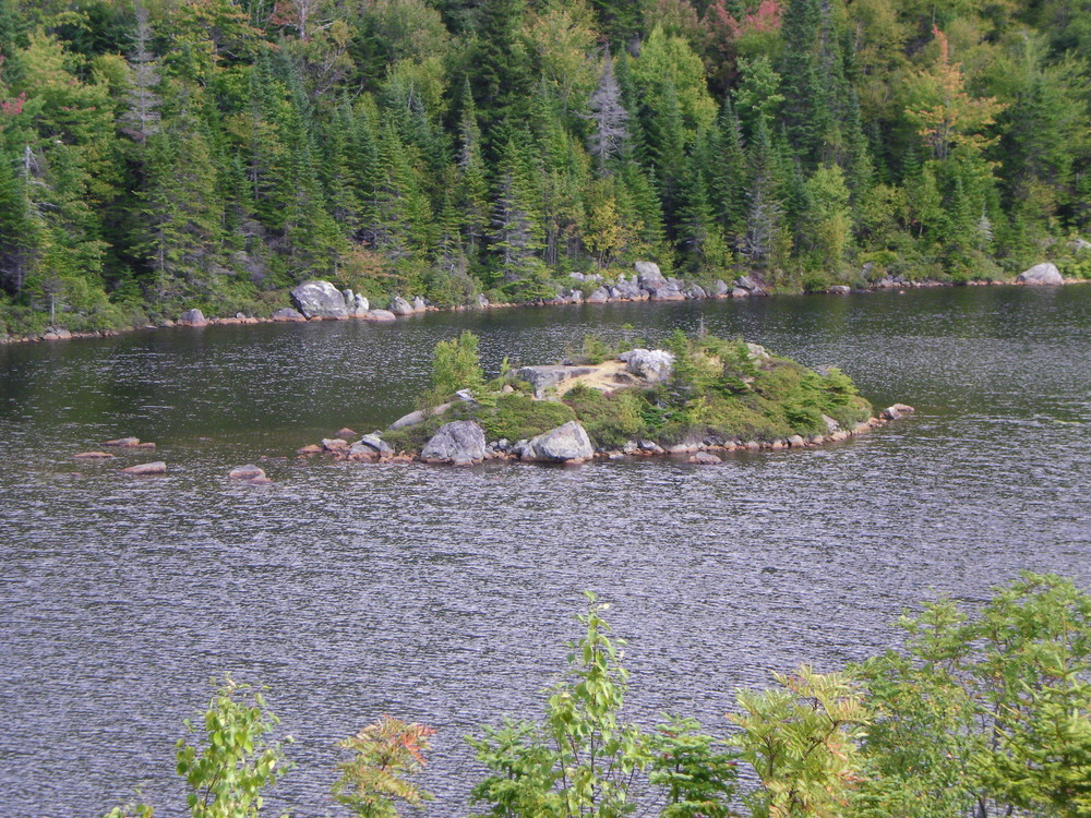 Tumbledown Pond - Island in the middle of the pond. (Credit: Chris Nason)