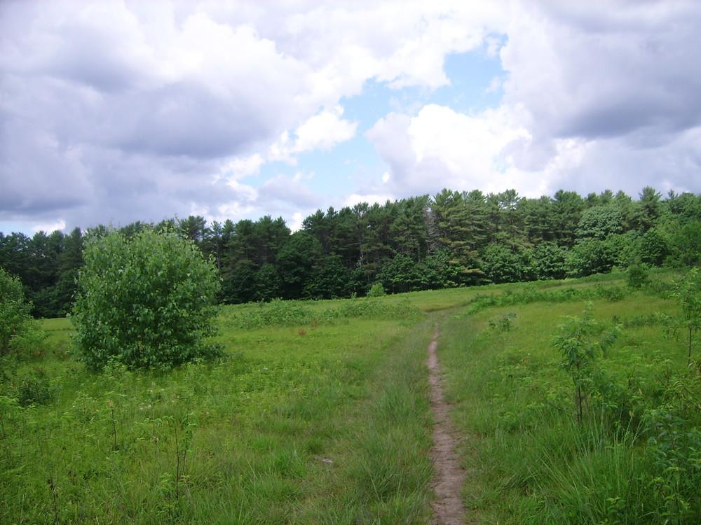 Path through the Fields (Credit: Kjell Nordstrom)
