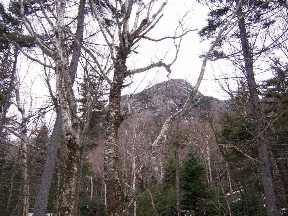 (Credit: Maine Appalachian Trail Club)