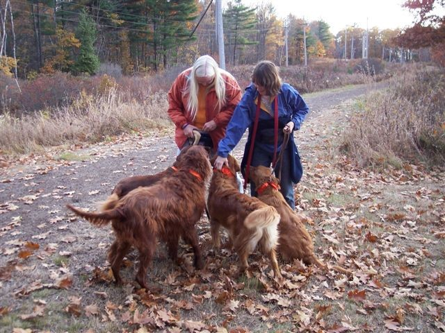 Hiking with Dogs (Credit: Kennebec Messalonskee Trails)
