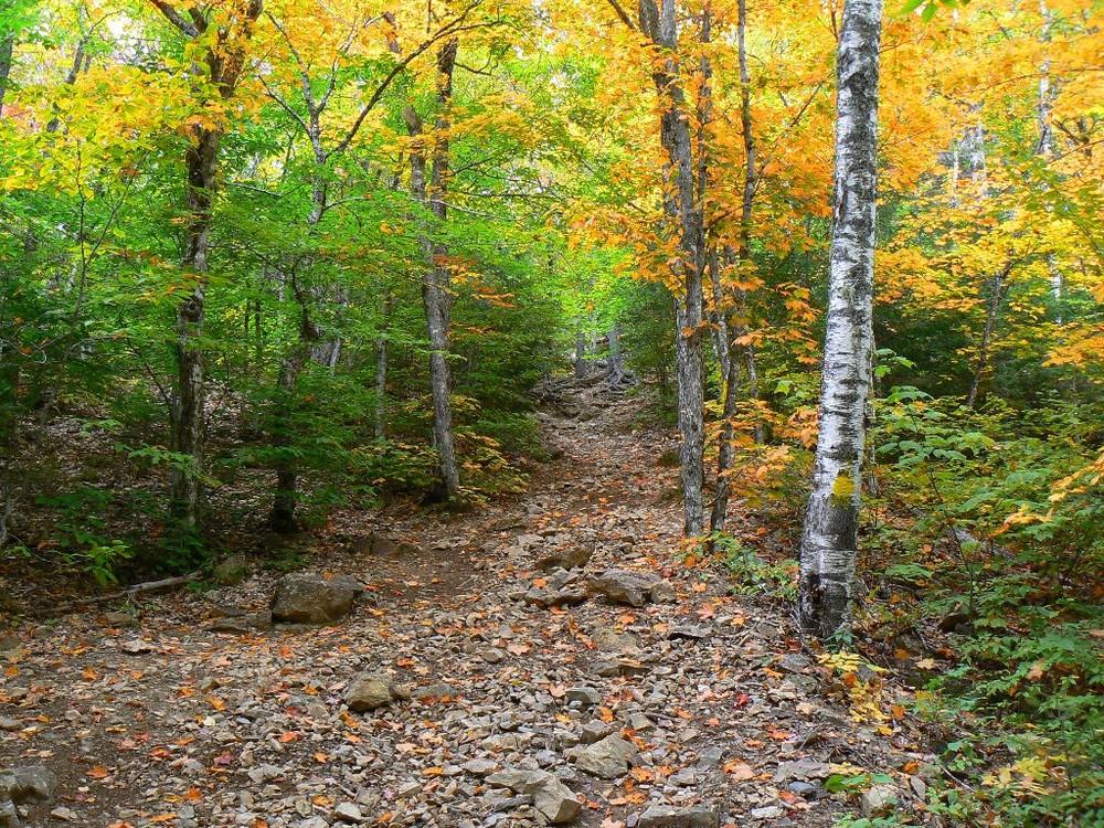 Haystack's forest floor trail in autumn (Credit: Aroostook Outdoor)