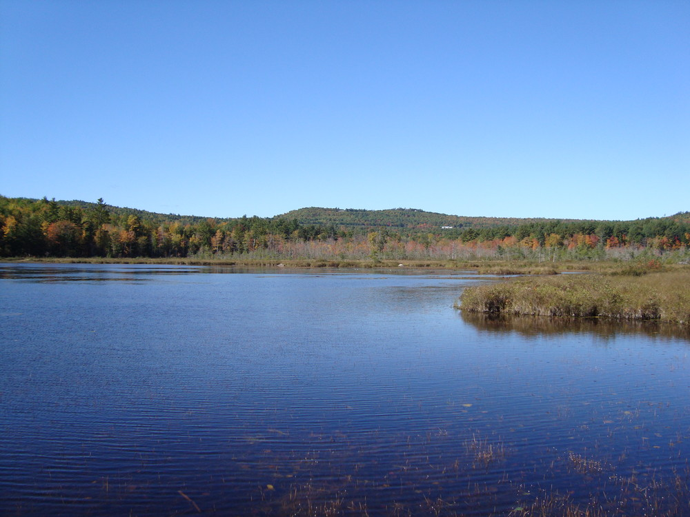 View of Holt Pond (Credit: Lakes Environmental Association)