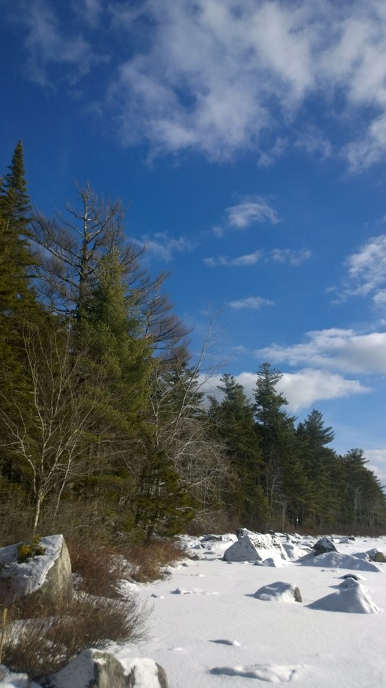 Warm, sunny January day at the lake on the Forest Loop (Credit: Tim Henderson)