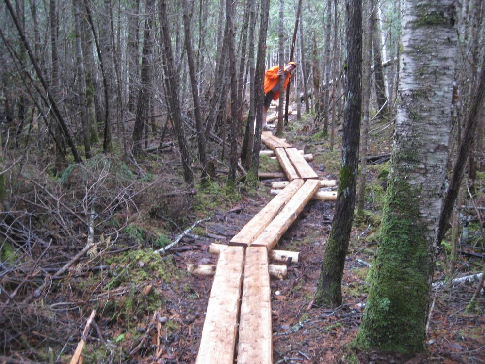 Bog Bridging (Credit: Western Foothills Land Trust)