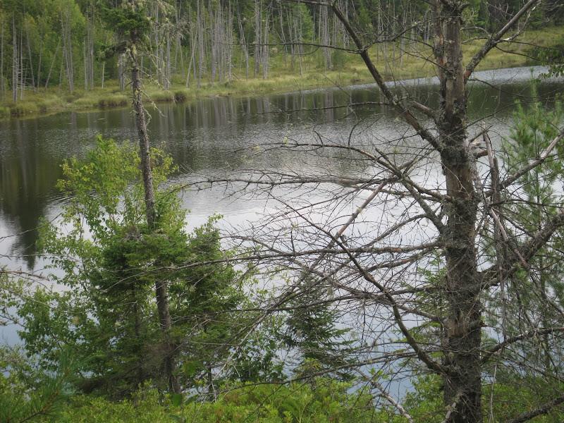 Woodman Pond from the Trail (Credit: Bill Geller)