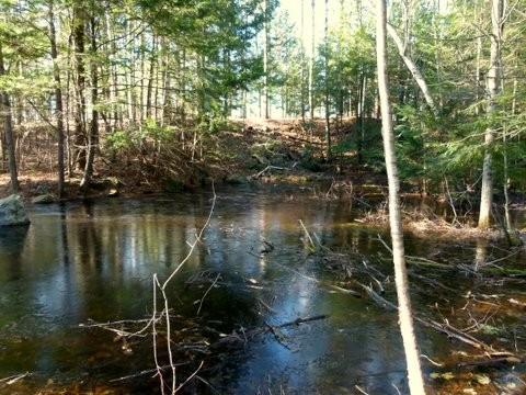 Vernal Pool Encircled by Pond Loop (Credit: Andii Walker)