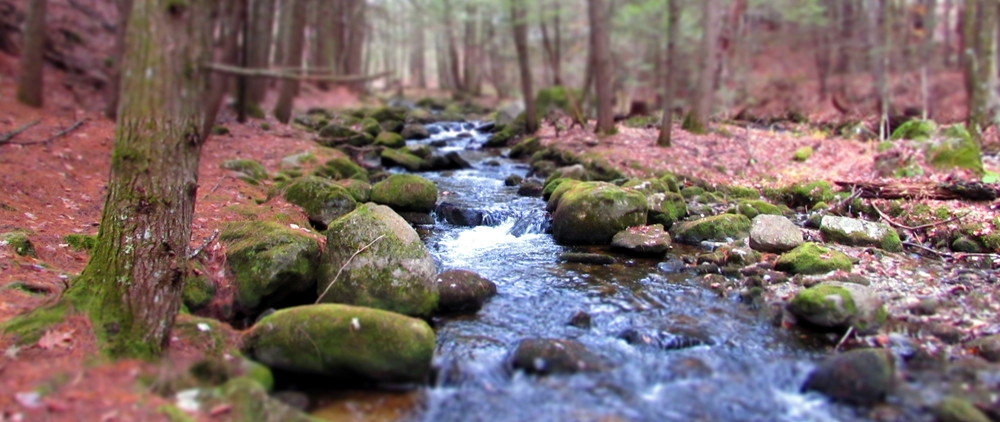 Early November on the brook (Credit: gary janson)