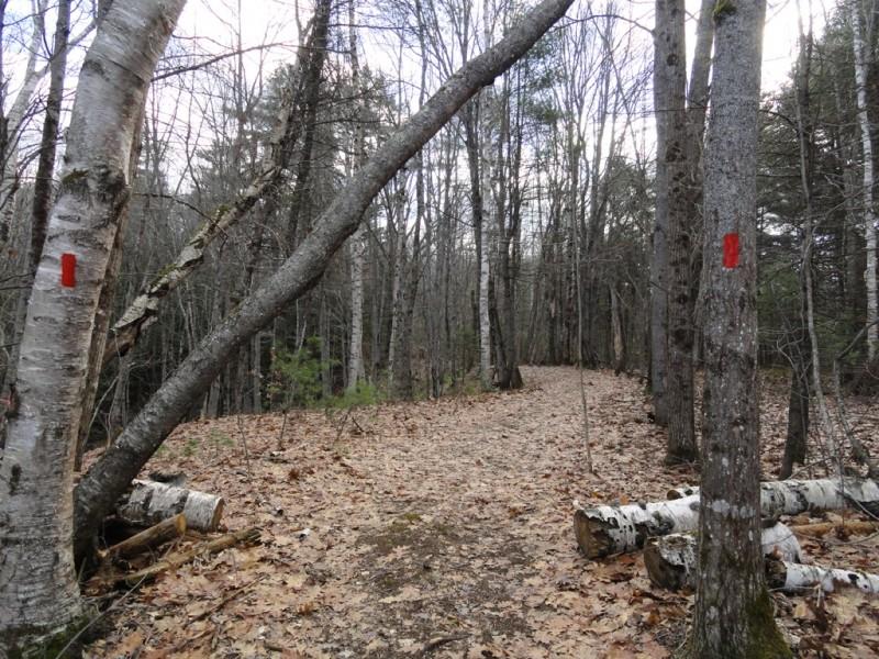 Ravine Trail (Credit: Center for Community GIS)