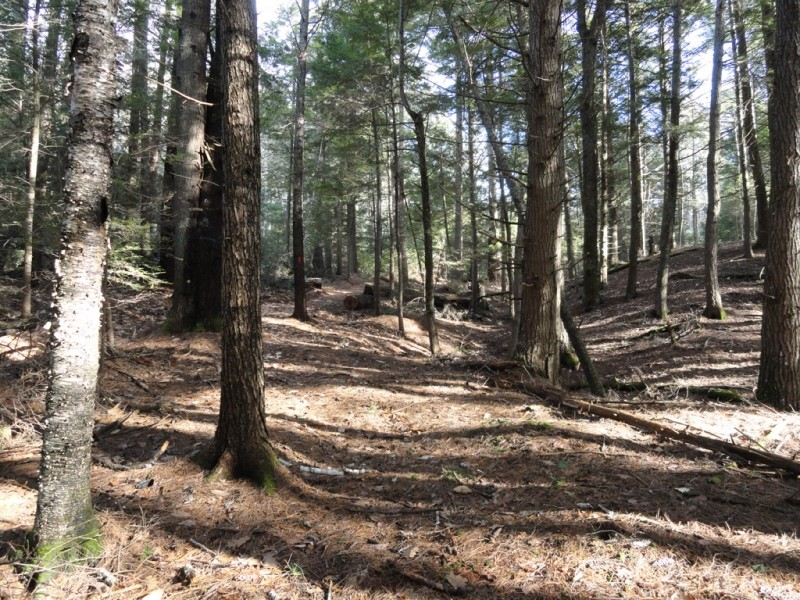 Path winds through towering hemlocks (Credit: Center for Community GIS)