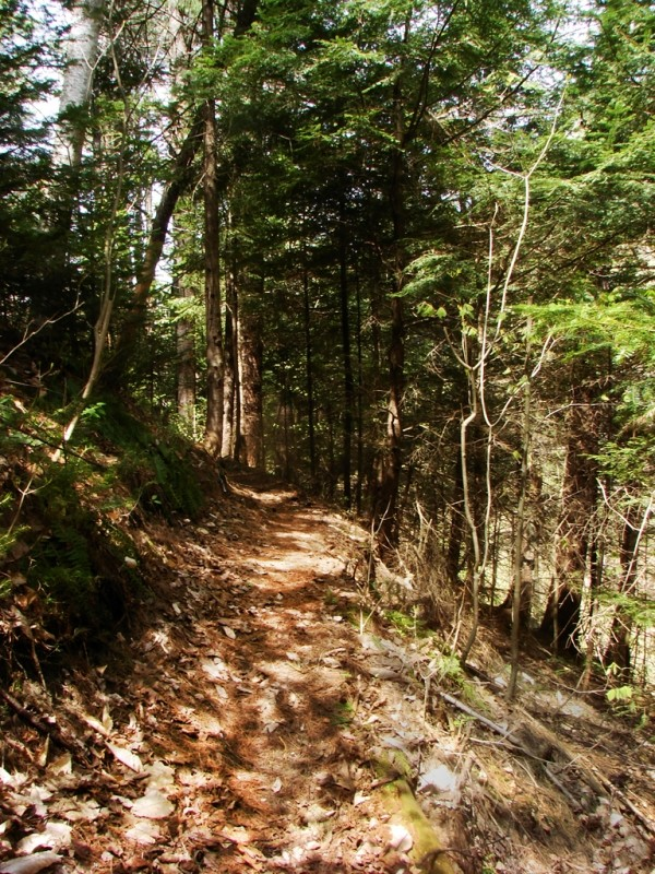 The Little River Trail is almost entirely woodland (Credit: Ken Gross)