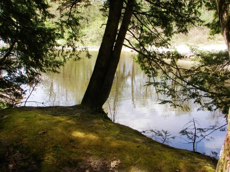 Mossy patch along the Little River (Credit: Ken Gross)
