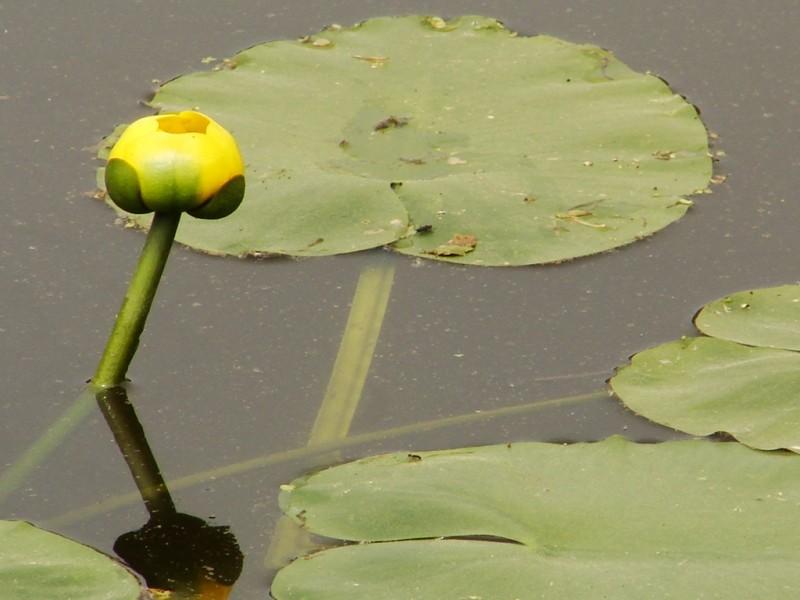 Picturesque beauty that Monet would appreciate (Credit: Susan Mathias)