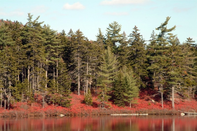 Fall shrubs turning scarlet along the shoreline of Salmon Pond (Credit: Maine Bureau of Parks and Lands)