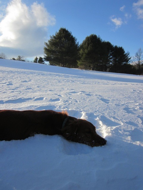 Walking (or not) with the dog (Credit: Western Foothills Land Trust)
