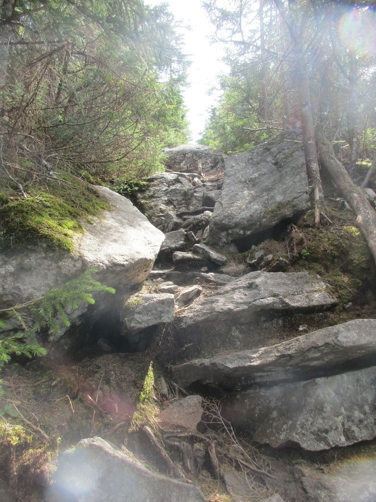 The trail (Credit: Theresa York)