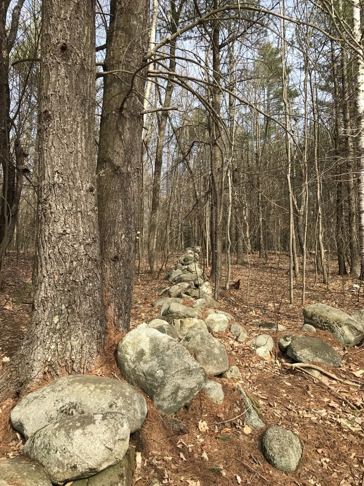 Beautiful stone walls, especially on Blueberry Trail