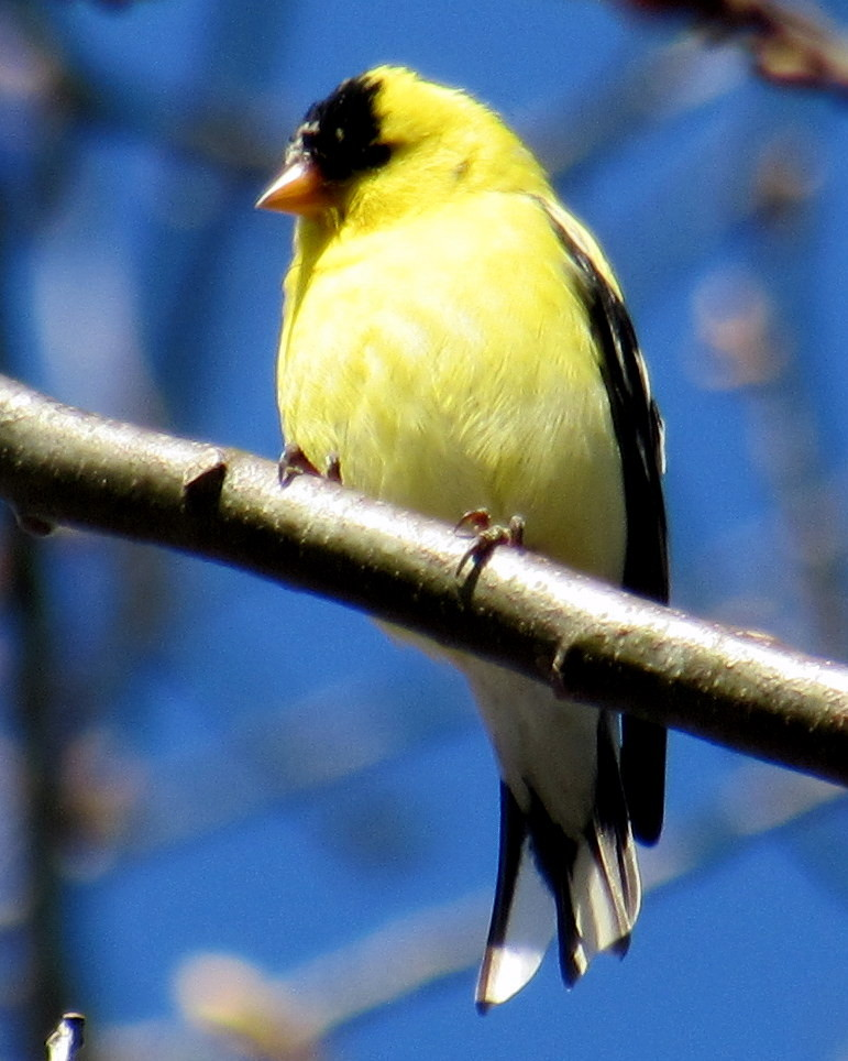 I also met a goldfinch here today as well (Credit: gary janson)