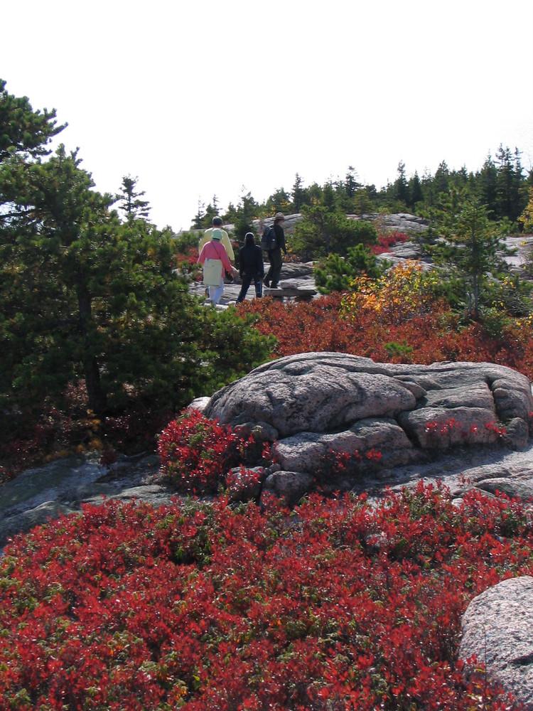 Gorham Mountain Trail (Credit: National Park Service)