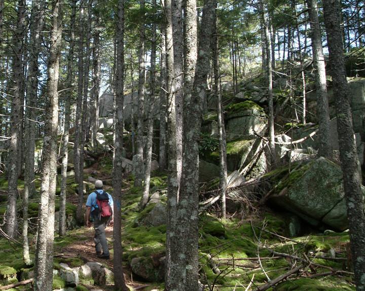 Spruce Woodlands (Credit: Maine Bureau of Parks and Lands)