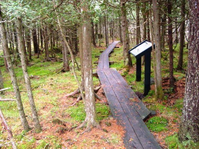 (Credit: Maine Coastal Island National Wildlife Refuge)