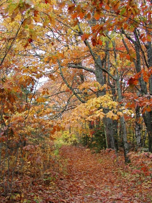 Homestead Trail in autumn (Credit: Friends of Sears Island)