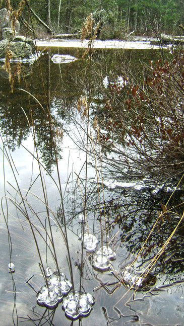 Ice starting to form on Ducktail Pond (Credit: Maine Bureau of Parks and Lands)