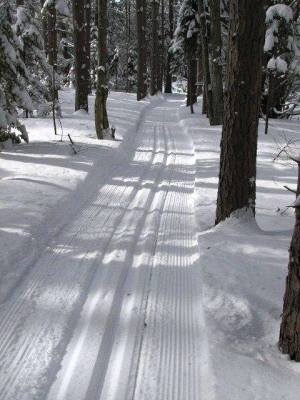 Winding through the Pines (Credit: Stephen Engle)