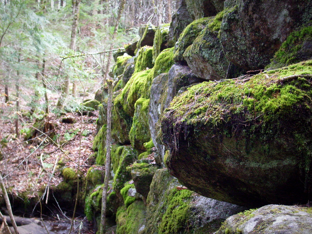 Moss covered old dam (Credit: gary janson)