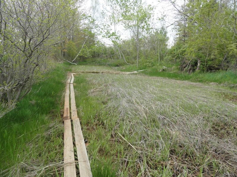 Planks provide a dry route over the marsh grasses (Credit: Center for Community GIS)