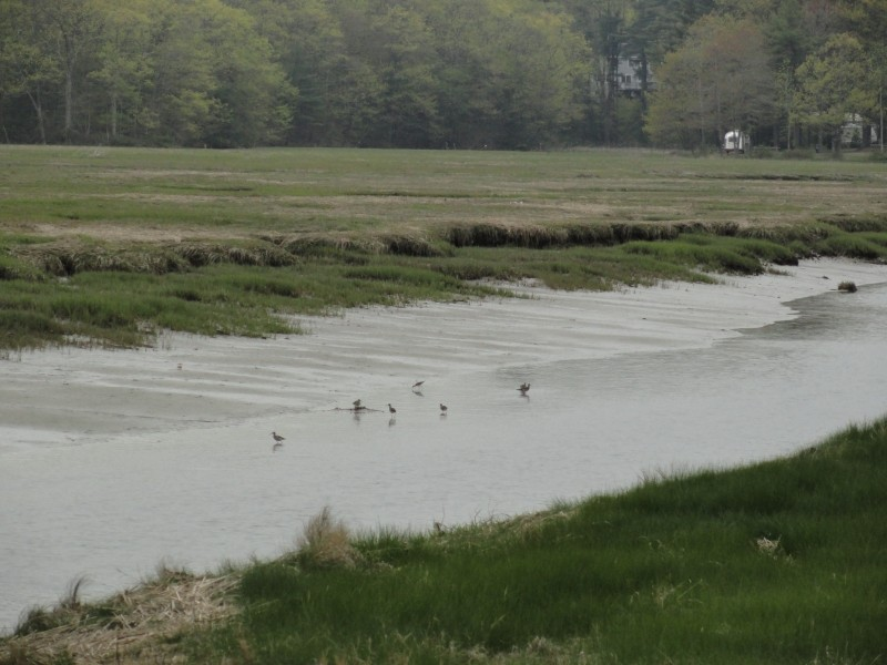Shore birds forage in the old canal (Credit: Center for Community GIS)