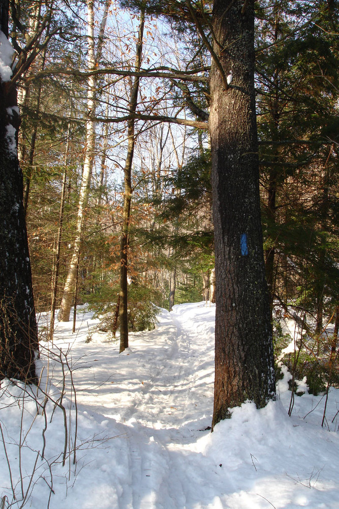 Cross Country Ski Trail (Credit: ME Department of Inland Fisheries/Wildlife)