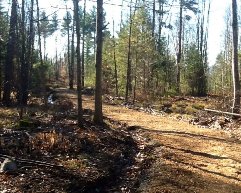 Ridge Road in the newer Village Woods Portion of the Network (Credit: Karen McCann)