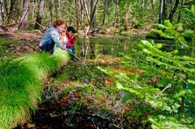 Kittredge Brook (Credit: Maine Coast Heritage Trust)