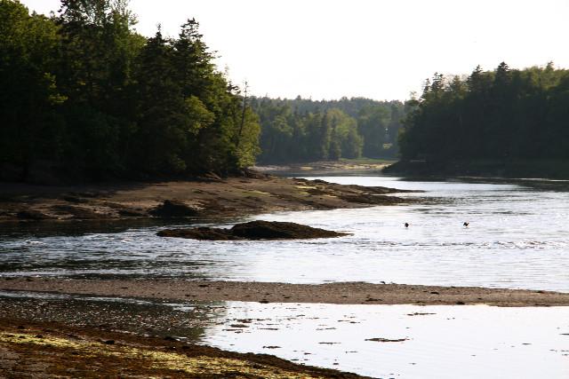 Little river (Credit: Vera Francis)
