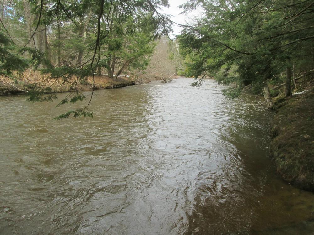 Swollen river, 4/13/17 (Credit: Roger Brown)