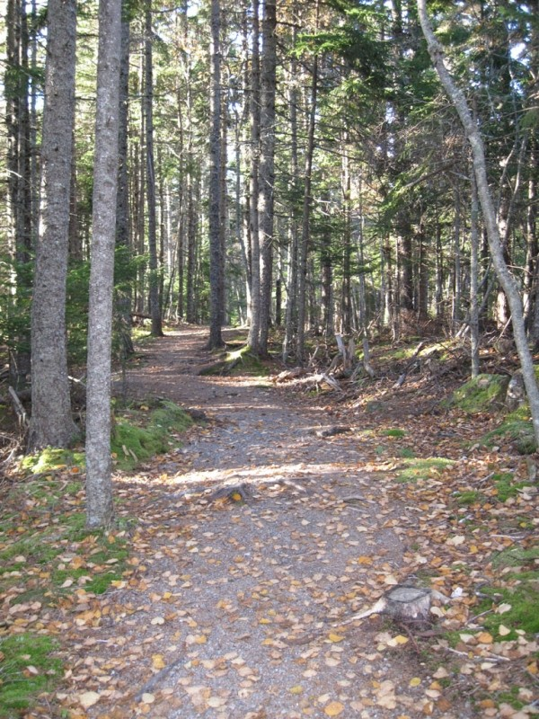 Trail into the mixed spruce forests of Shackford Head State Park (Credit: Maine Bureau of Parks and Lands)