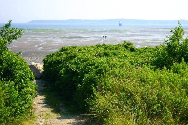 Path leading to Mowry Beach (Credit: Downeast Coastal Conservancy)