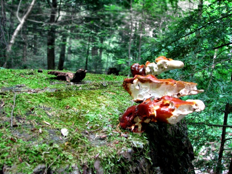Colorful fungi punctuate the landscape (Credit: Joel Alex)