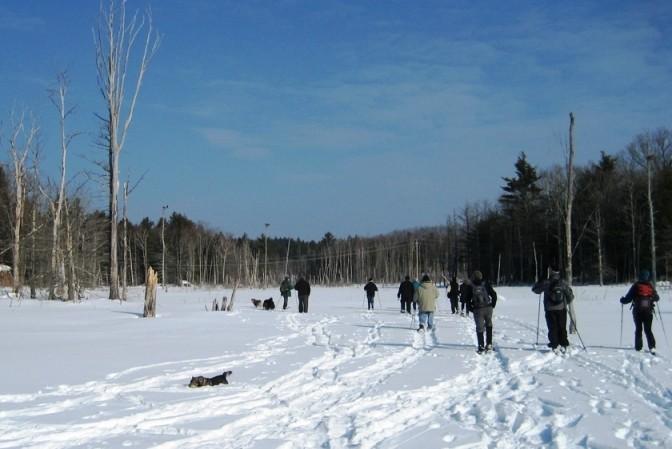 Frozen Marsh (Credit: Great Works Regional Land Trust)