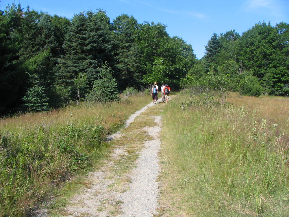 Path on the Island (Credit: National Park Service)