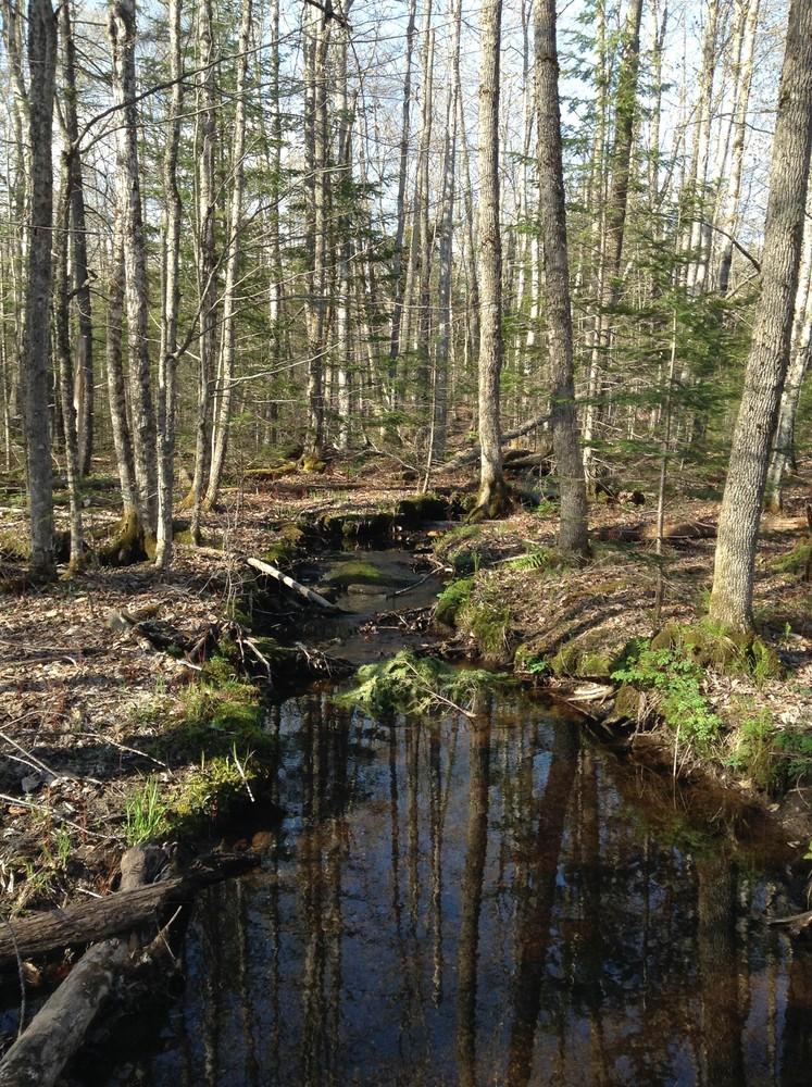 Brookside Trail (Credit: Center for Community GIS)