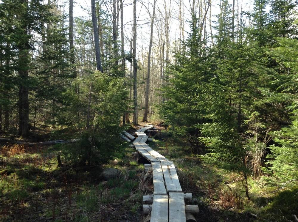Boardwalk on Pine Trail (Credit: Center for Community GIS)