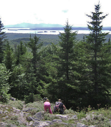 Picking berries (Credit: Maine Bureau of Parks and Lands)