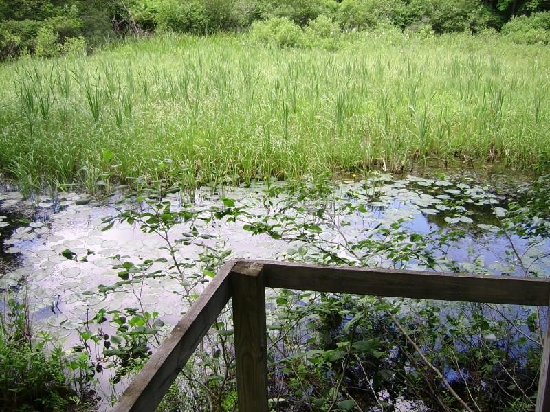 Wetland viewing platform (Credit: Kjell Nordstrom)